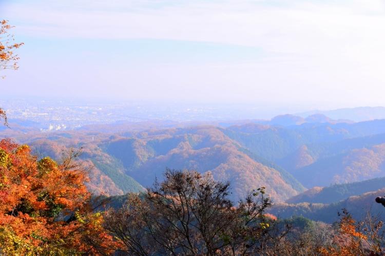高尾山楓紅