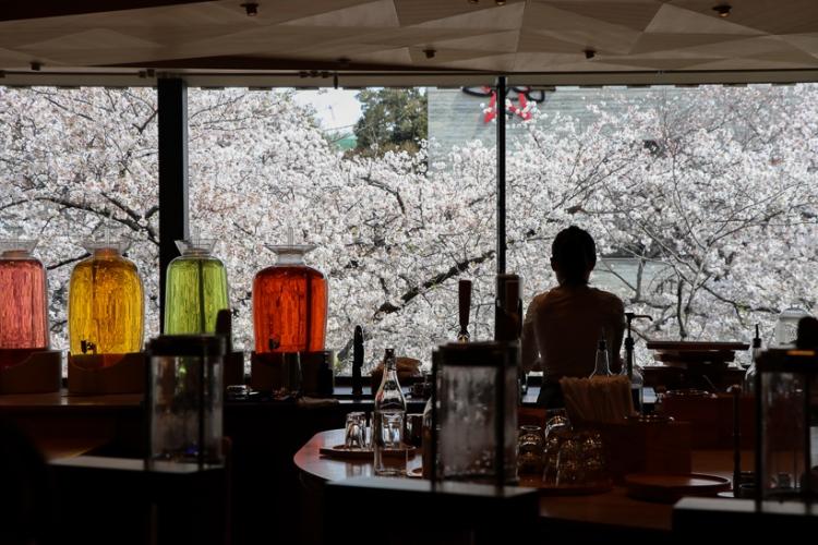 櫻花季的星巴克臻選烘焙工坊