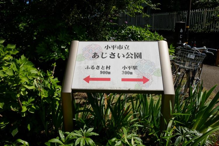 小平市立繡球花公園