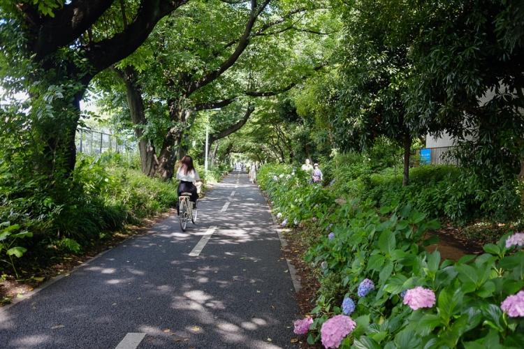 多摩湖自行車道路(多摩湖自転車道路)